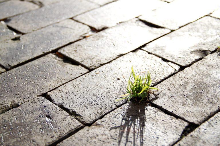 Qual a importância da sustentabilidade?
